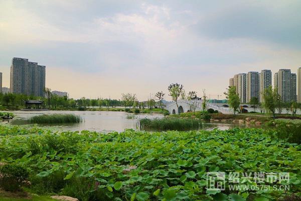 柯桥坂湖实景图