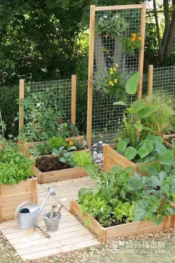 兒童菜園示意圖 | 圖片來源于網絡
