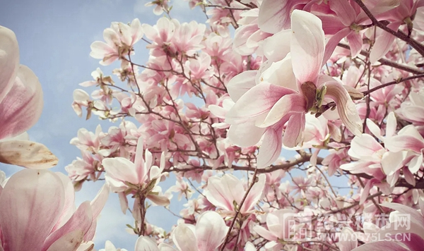 #满园假日春趣# 朋友圈摄影大赛,美好启幕!  第2张