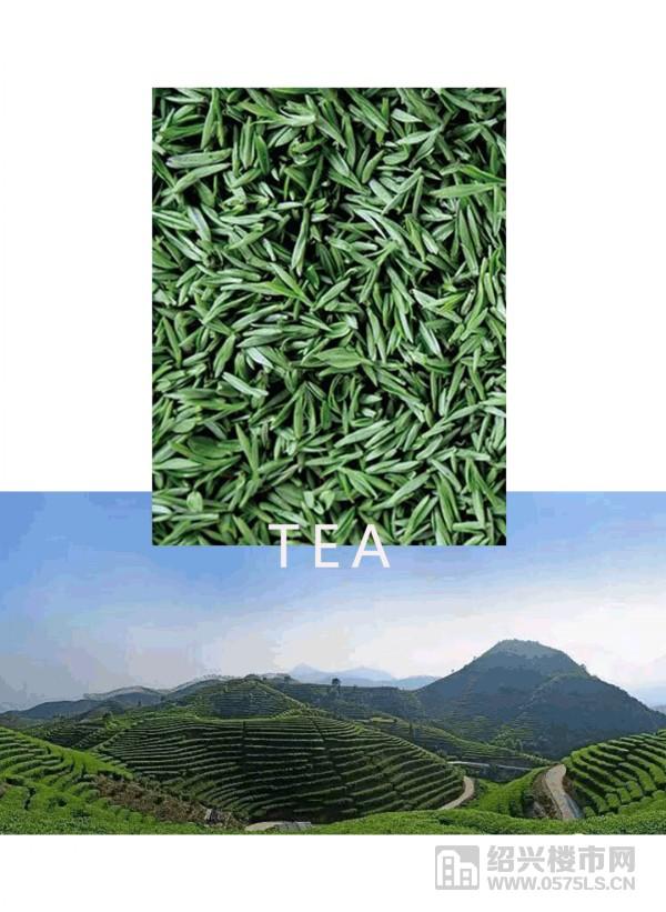 | 茶实景图